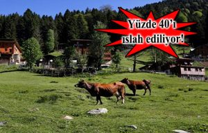 dogu-ve-guneydoguda-4-milyon-hektar-mera-kullanima-acilacak